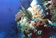 Scuba Diving center El Colony